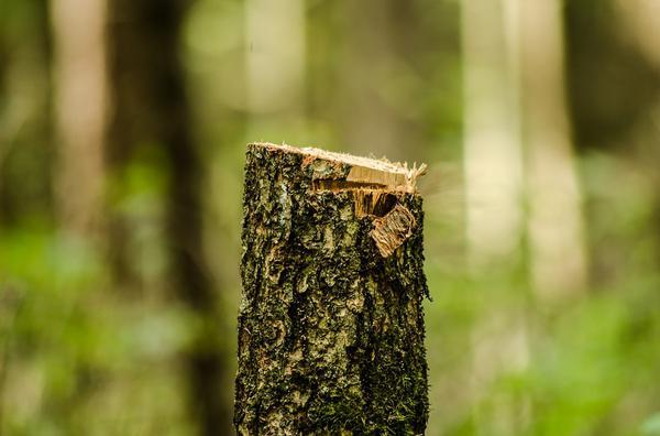 Wycinka drzew na terenie Warszawy