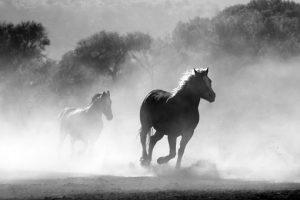 Ujeżdżalnie pomagają wytrenować konia