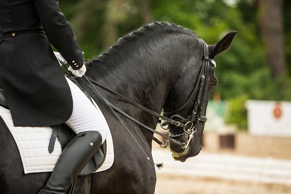 wygodny frak jeździecki