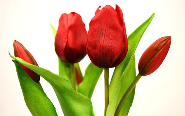 miejscowa hurtownia kwiatów sztucznych