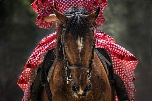 ujeżdżeniowe ogłowie dla konia
